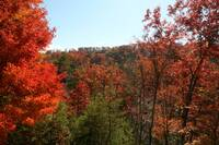 FALL VIEW at SNUGGLED IN in Sevier County TN