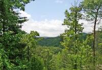 SUMMER VIEW at MEDICINE MAN in Sevier County TN