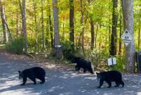 DO NOT FEED THE BEARS! at XHOLIDAY HOUSE in Gatlinburg TN