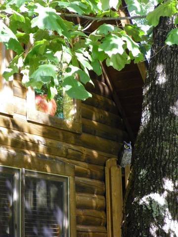 Gatlinburg Cabin Rentals_Apple Jack Hollow_Cabin Front 2