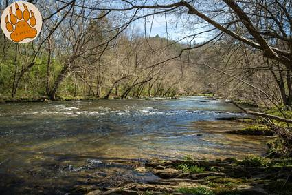 Photo of River Song (new Listing)