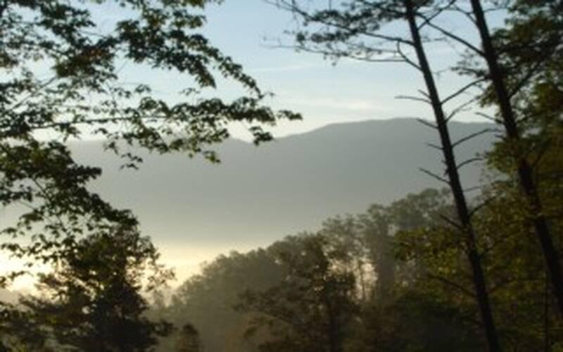 Mountain Mist 19
