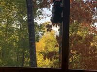 SMOKY BEAR'S RETREAT