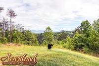 Mountain Views at Dolly Bear - one bedroom cabin rental in Pigeon Forge