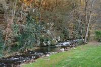 Cozy Creek