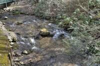 Briar Creek