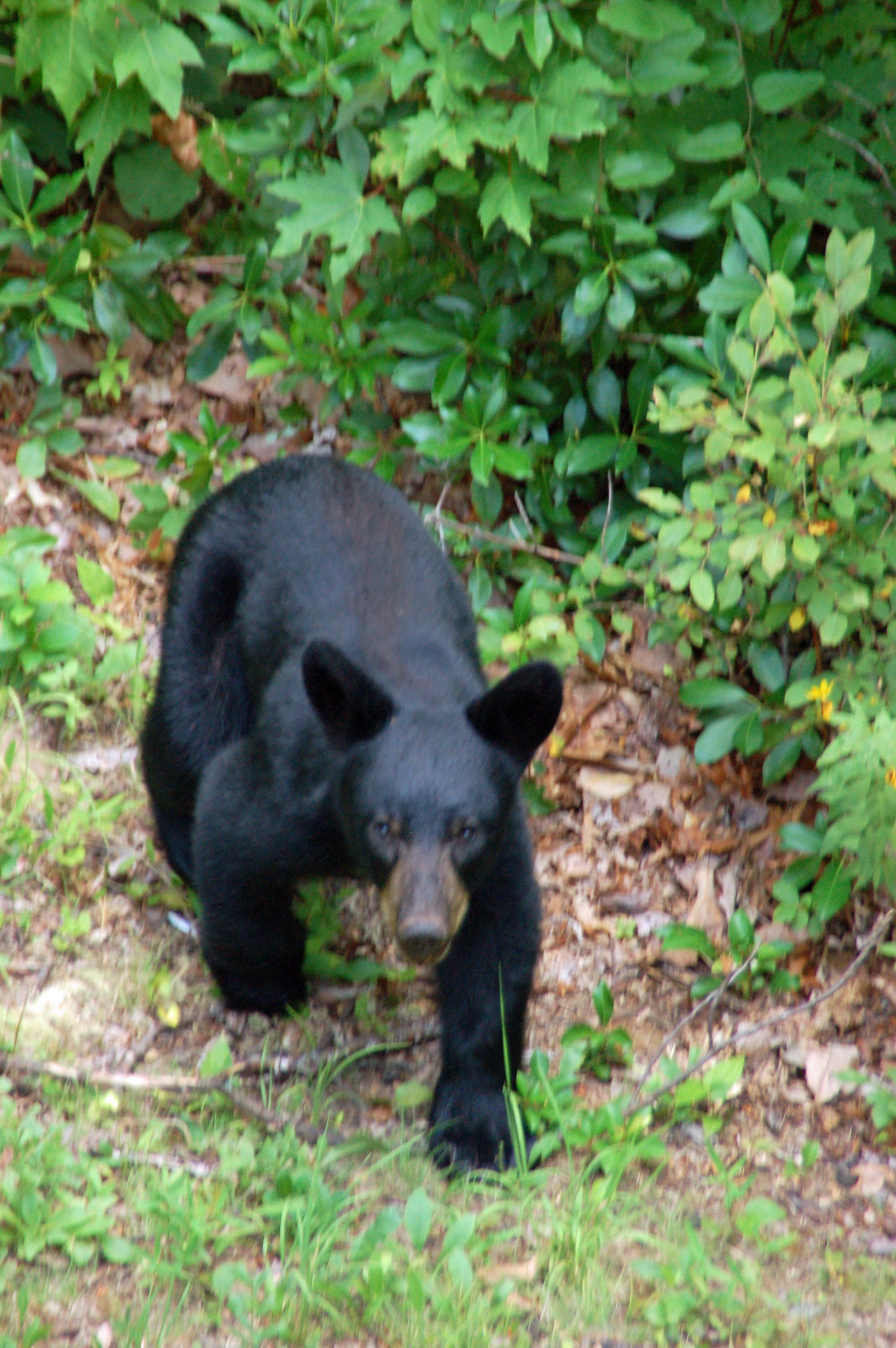wildlife around the area