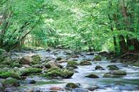 Cork's Creekside