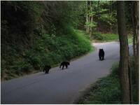 We do love our bears